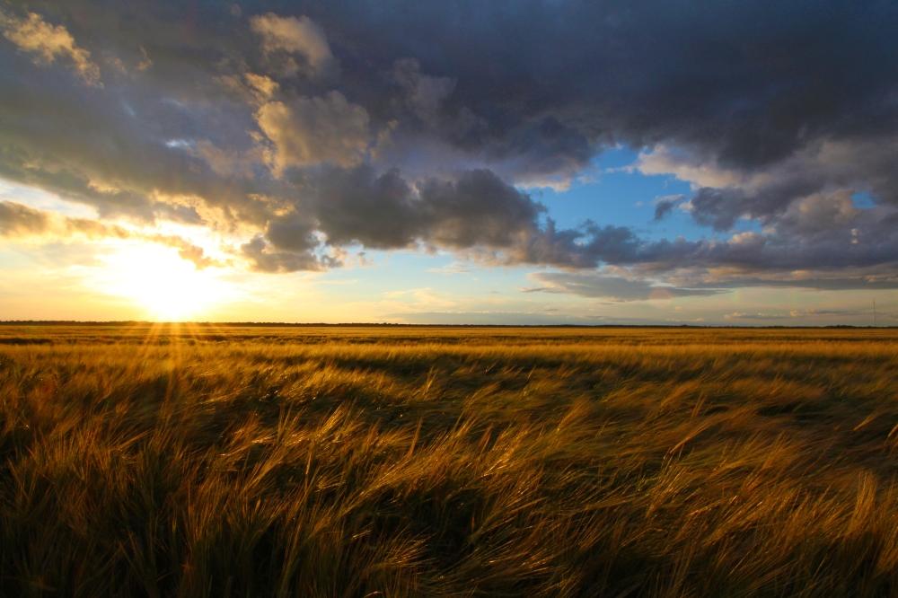 fieldinthe sunset